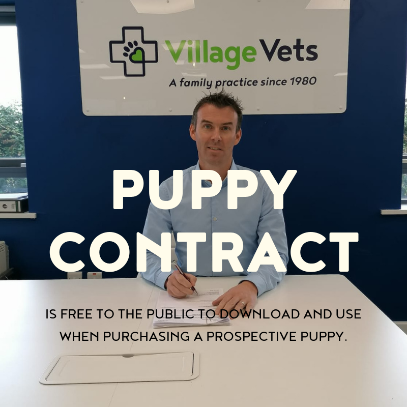 dog control legislation, village vets submission, buy puppy, puppy farms