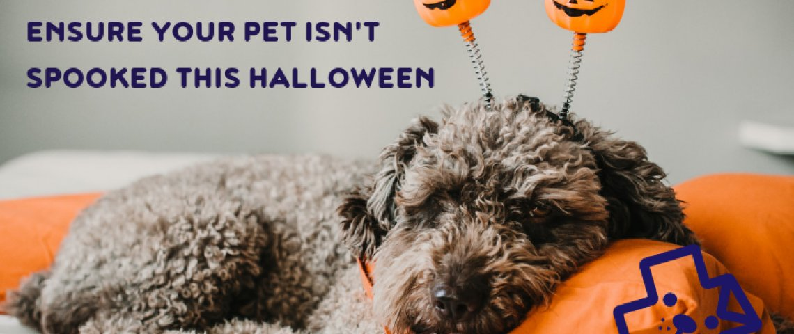 halloween and pets, pet tips for halloween, dogs and halloween, cats halloween