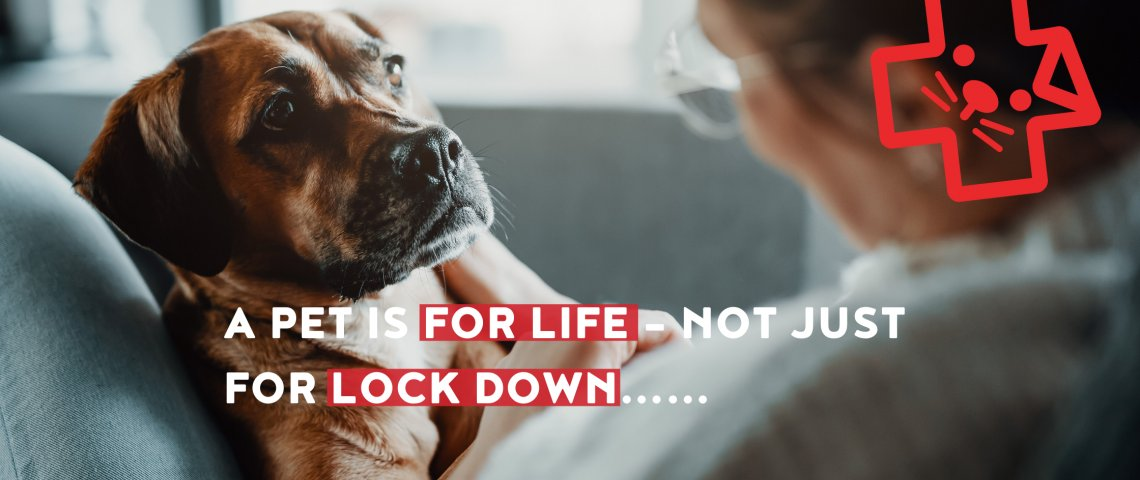 pet is for life not just for lockdown, sad dog looking at the owner