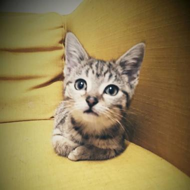 dunshaughlin cat hotel, cat cattery dunshaughlin, cat cattery meath, cat cattery near me