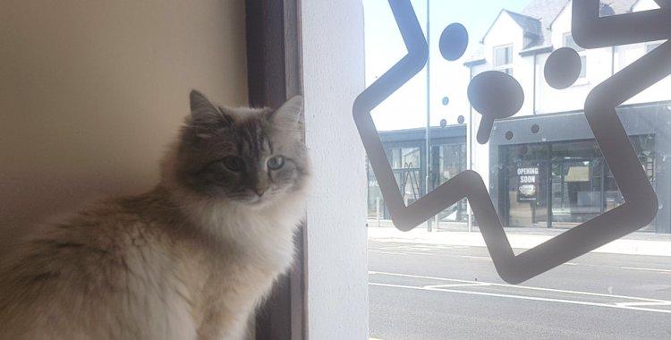 dunshaughlin cat hotel, cat cattery dublin
