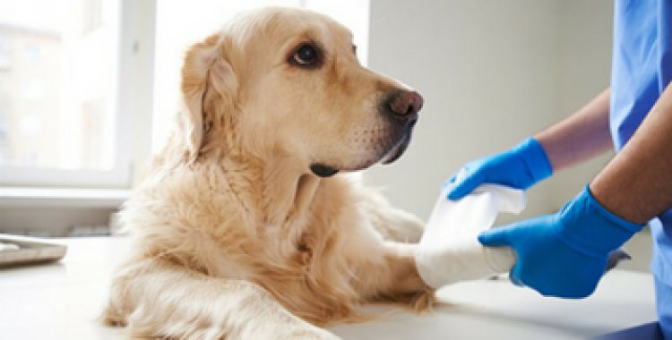 sandyford vets appointment, villagevets sandyford appointment