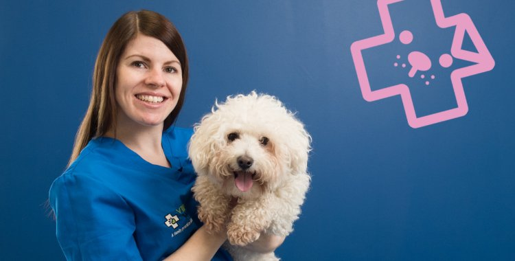 call clonsilla vet, vet on call, emergency vet