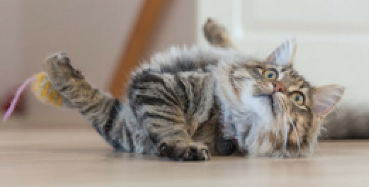 coolock cattery, coolock cat hotel, cat cattery northside, cat cattery near me