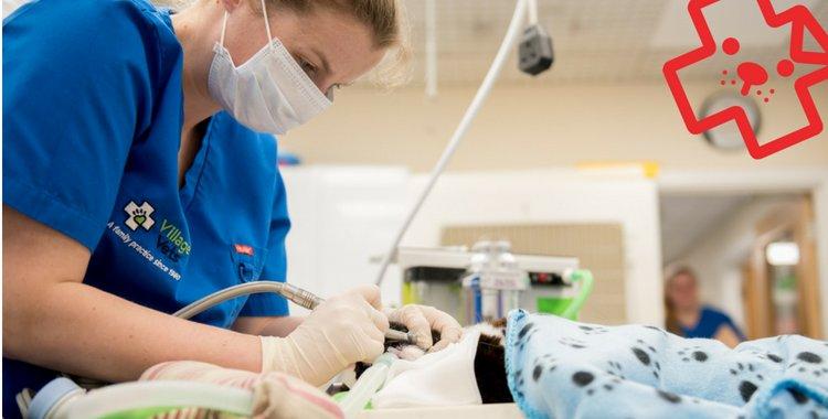 dog dental, cat dental, dog smelly breath, dog teeth