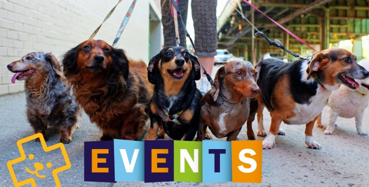 things to do in dublin this weekend, pet events, things to do with kids