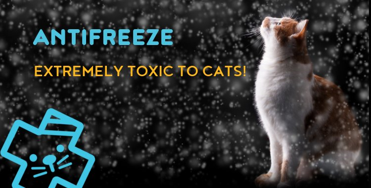 cats and antifreeze, antifreeze