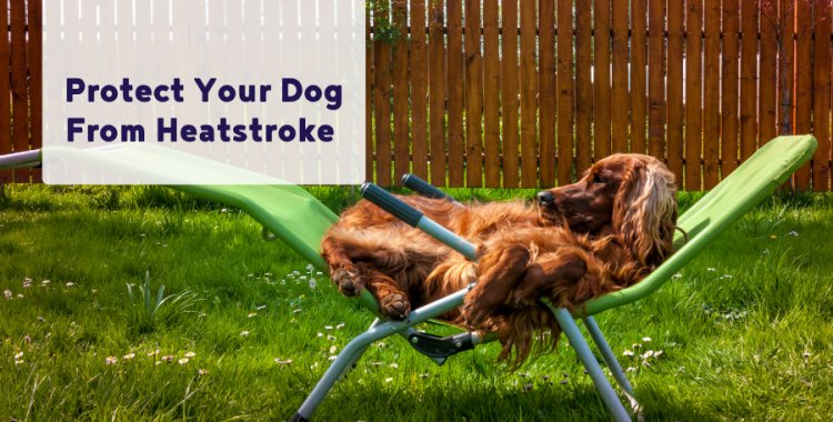 dog heatstroke,independent.ie