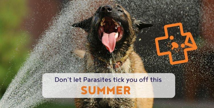 dog parasites, cat parasites, my dog has a tick, ticks and dogs, ticks and cats.