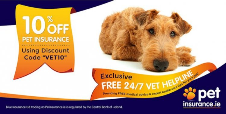insurance discount, pet insurance cheap, pet insurance