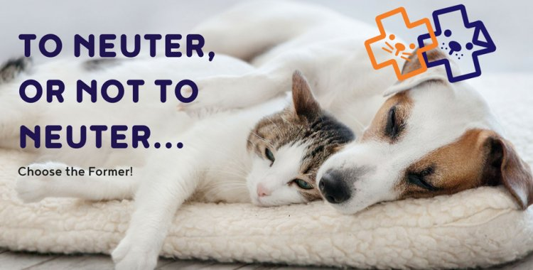 To Neuter, or not to Neuter... Choose the Former ...