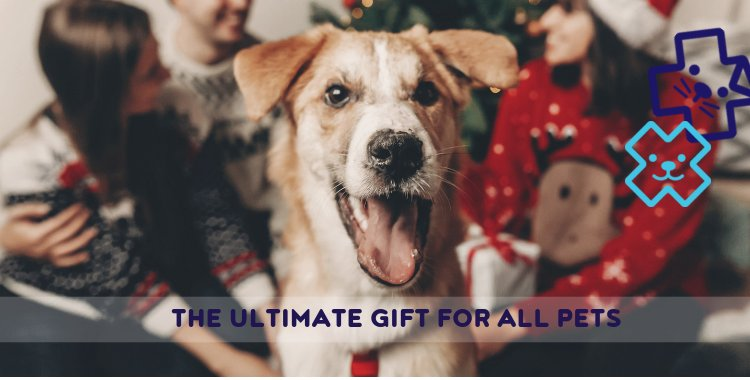 christmas presents,christmas_presents_christmas_present_for_dog_vaccines_veterinary_dog_cat_pet_health_plan_puppy_village_vets_dublin