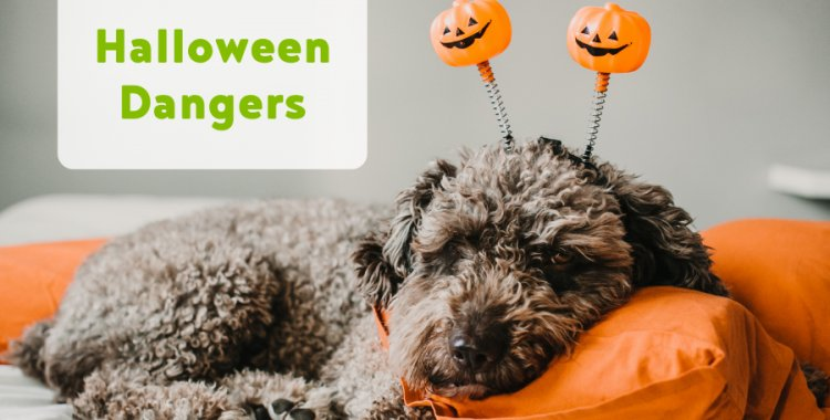 halloween dangers
