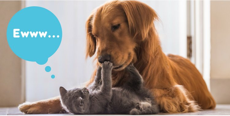dog dental, cat dental, cat bad breath, dog bad breath