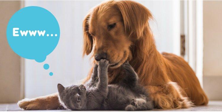dog dental, cat dental, cat bad breath, dog bad breath