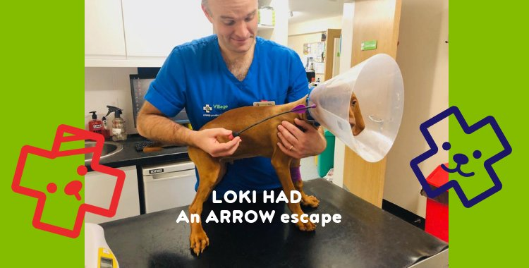 arrow dog, dog that swallowed an arrow
