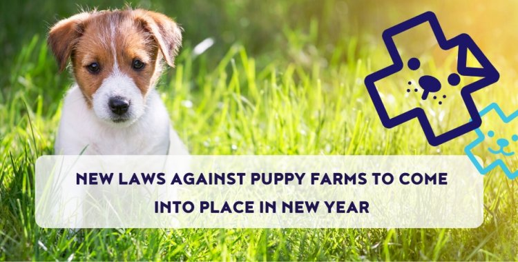 puppy farms, puppy contract, puppies, buy puppies