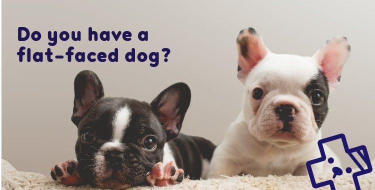 stenotic nares, flat face dog surgery, dog nose surgery