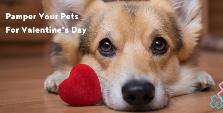 pets and valentines, village vets valentines, valentines day competition