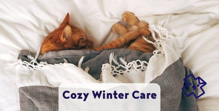 Winter pet care