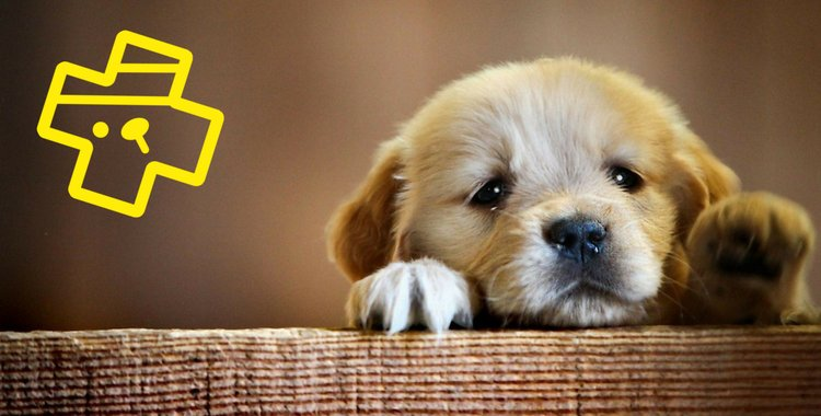 Puppy Contract | Village Vets