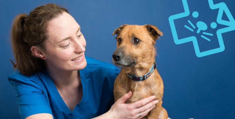 dublin vet, vet near me, pet insurance, dog insurance, cat insurance