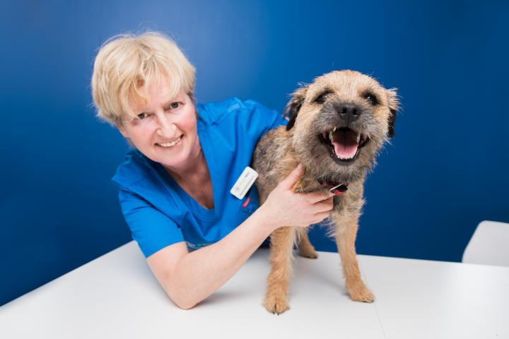 Frieda Baragwanath, vet dublin, vet meath, village vets dunshaughlin