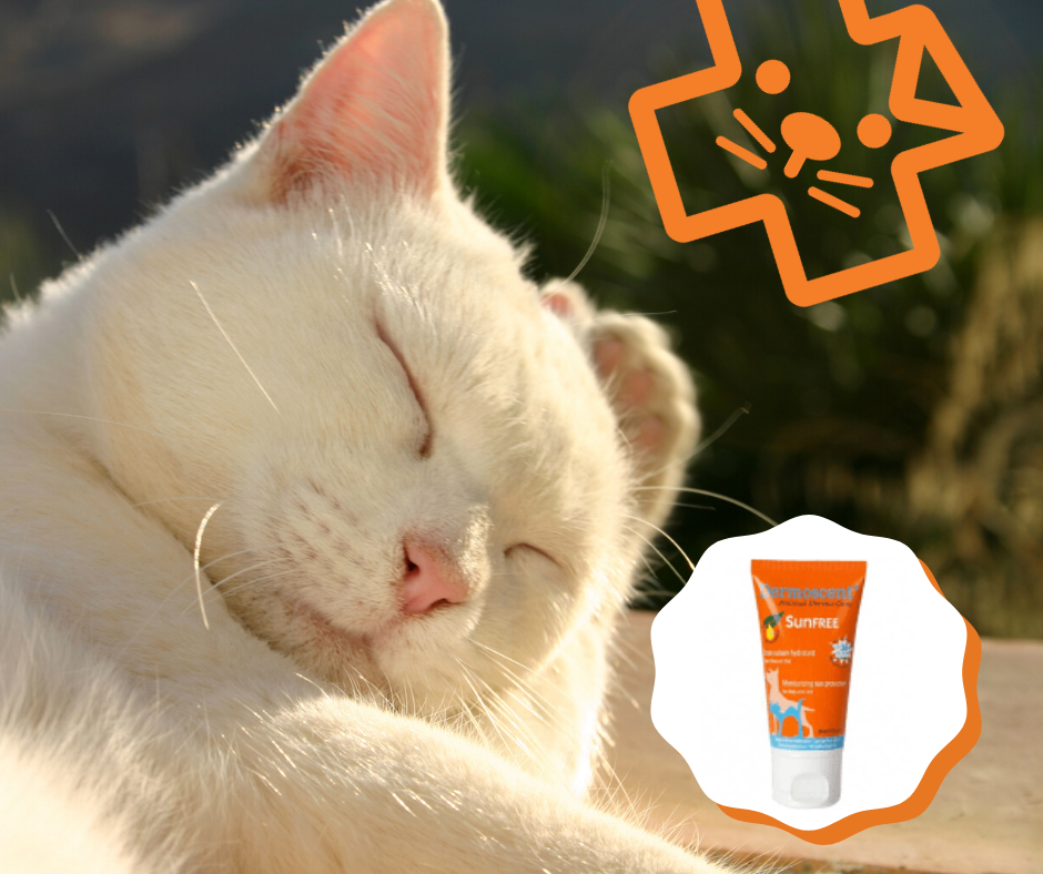 sun cream for cats, dog sun cream, cats and sun